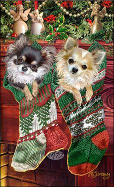 "Long Coat Chihuahua Christmas Cards are 8 1/2"" x 5 1/2"" and come in packages of 12 cards. One design per package. All designs include envelopes, your personal message, and choice of greeting.Select the greeting of your choice from the drop-down menu above.Add your personal message to the Comments box during checkout."