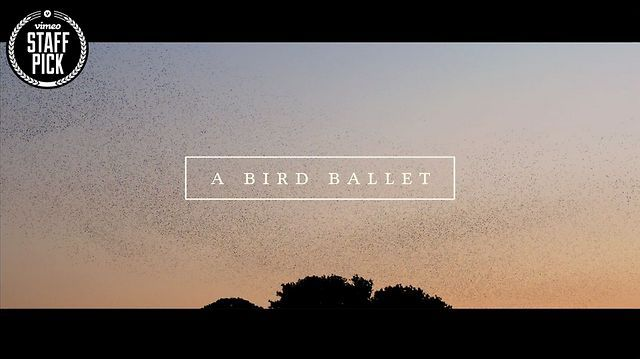 A bird ballet | Music Video by Neels CASTILLON. We were shooting for a commercial with my DP waiting for an helicopter flying into the sunset, when thousands and thousands of birds came and made this incredible dance in the sky. It was amazing, we just forgot our job and started this little piece of poetry... Enjoy !
