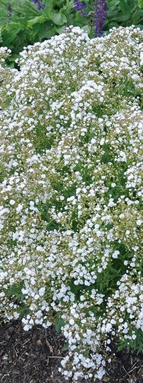 1000+ Ideas About Small Flower Gardens On Pinterest