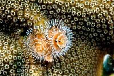 Coral Polyps on Caribbean Reef, Bonaire
