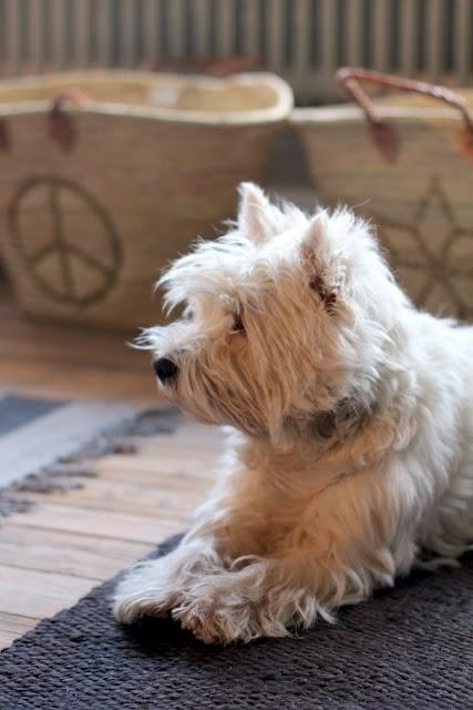 Dog Boarding Highland Mi