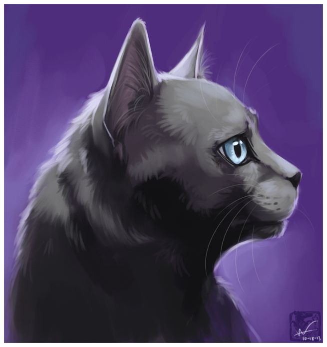 Warriors Erin Hunter Reading Order: 17 Best Images About Warrior Cats On Pinterest