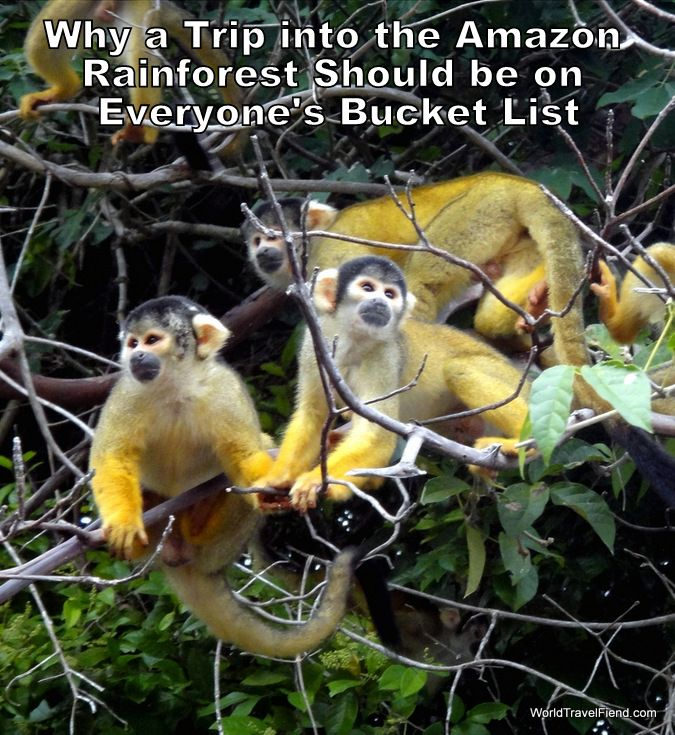 Who doesn't want to visit the Amazon Rainforest at some point in their lives?  The fact that you get this up close & personal with a bunch of squirrel monkeys is reason enough to go!  #travel #Bolivia #Amazon #AmazonRainforest http://www.worldtravelfiend.com/amazon-rainforest-experience-1/