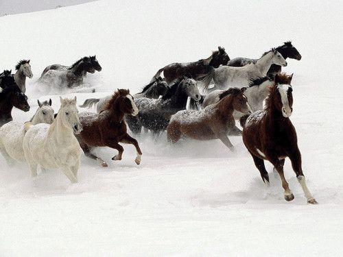 .: Beautiful Horses, Photos, Animals, Winter, Snow, Photography, Wild Horses