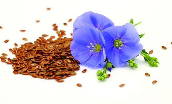 Lino o linaza: Baja el colesterol malo (LDL alto).   El mucilago semillar elimina el estreñimiento sin causar irritación.   Es conocido el uso de la harina de lino para cataplasmas en los catarros del pecho, dolores en general, como madurativo de granos o cualquier supuración. La semilla molida con agua sobre el cuero cabelludo combate la caída. 40 gr de linaza diariamente dan una baja en la frecuencia y severidad de los sofocos menopausicos por los fitoestrógenos y ácidos omega-3