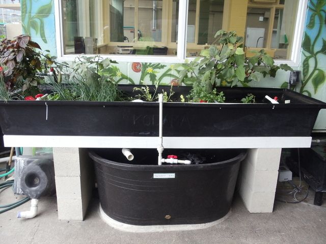 10 best images about aquaponics on pinterest gardens for Hydroponic bed liner