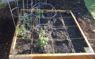 The Square Foot Gardening Guide