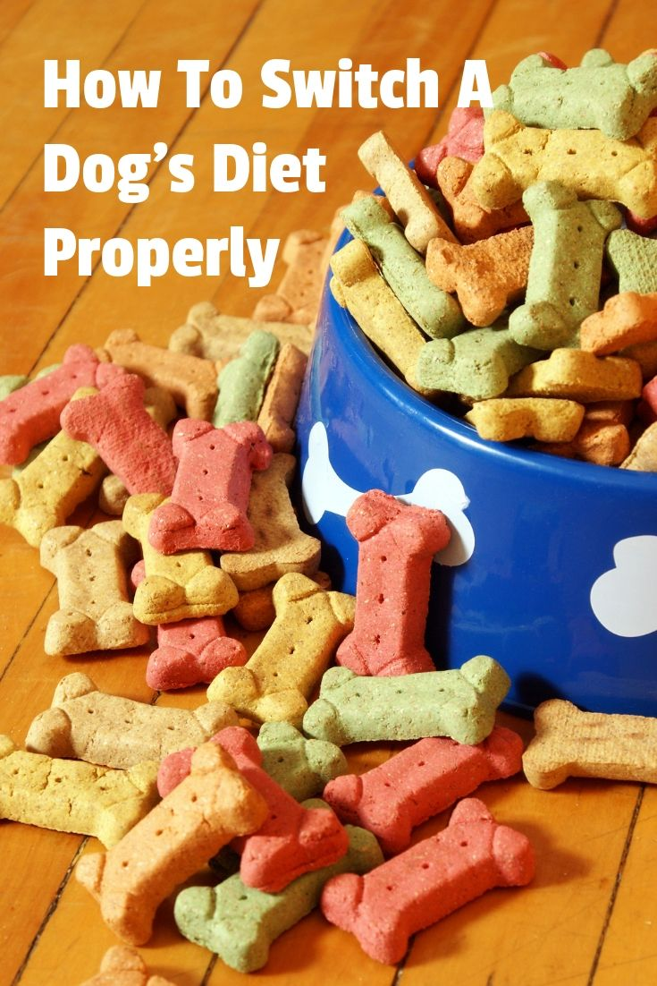 How To Switch A Dog S Diet Properly Doggie Cube Dog Food Recipes Dog Diet Dog Nutrition