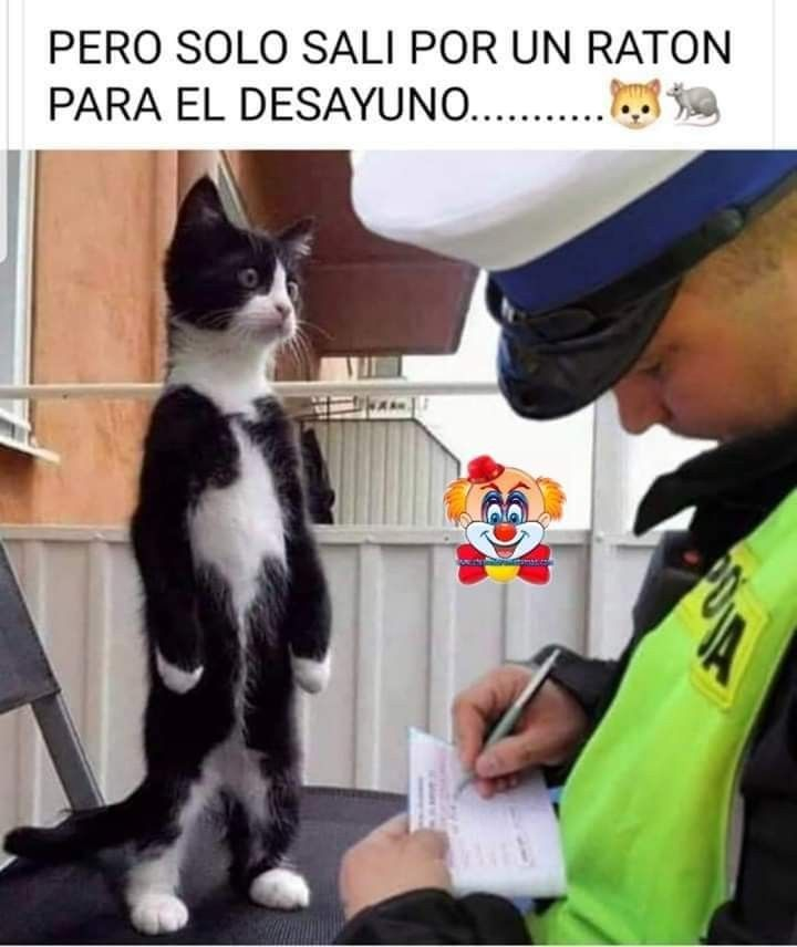 Pin De Daniela Chacon En Risoterapia Chistes Graciosos De Animales Memes Graciosos De Animales Memes De Perros Chistosos