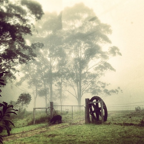 Foggy gumtrees and a wheel
