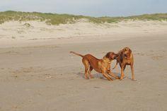 Urlaub mit Hund auf Texel (Holland)