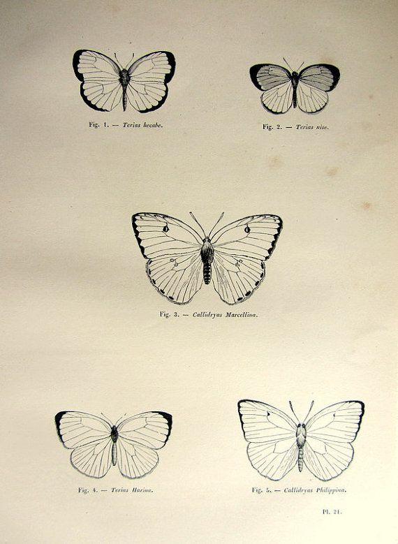 1860 vintage papillons impression, antique origine nice lepidoptera gravure, Papillon insectes entomologie plaque illustration. Cette origine