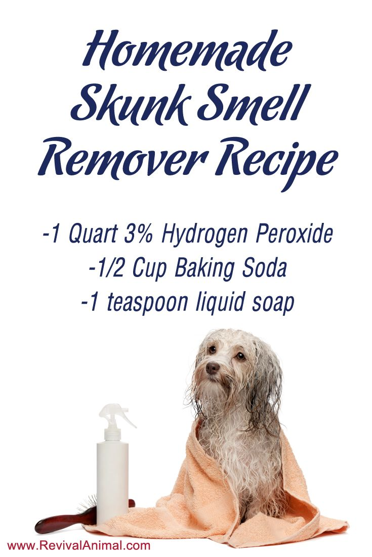 Simple homemade skunk smell remover recipe for dogs & cats: Amber's review