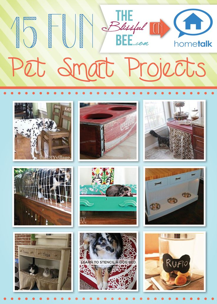 DIY & Crafts: 15 Fun Pet-Smart Projects!