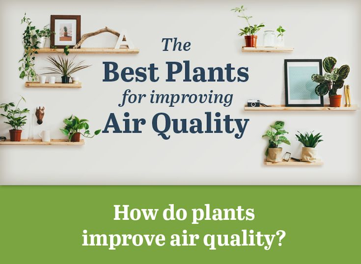 82 best indoor air quality images on pinterest indoor for Indoor plants for better air quality
