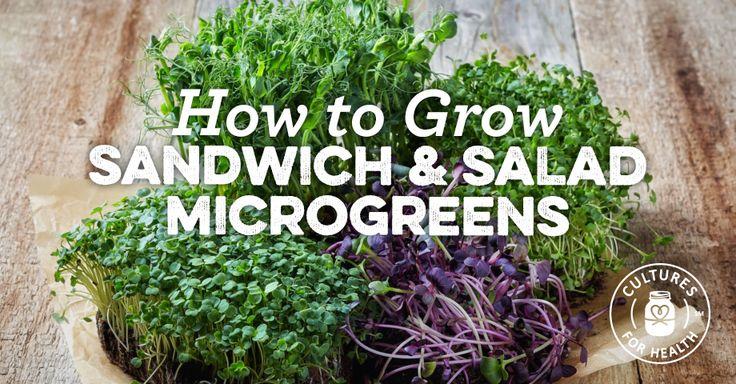 How To Grow Sandwich And Salad Microgreens