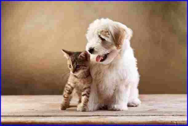 cute puppies and kittens together wallpaper cute puppies and