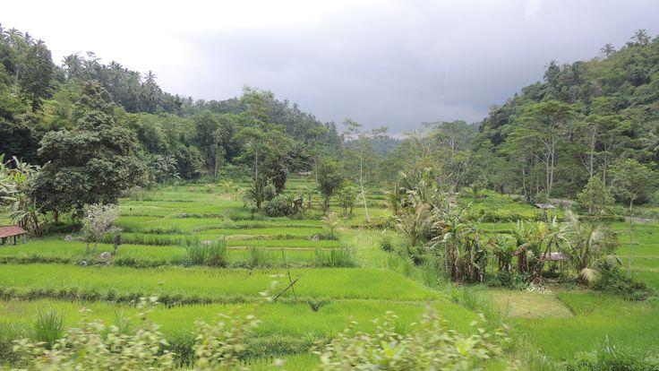 Reisefelder auf Bali #Steffen Abel