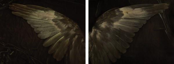 Fiona Pardington, Barbara's Kahurangi, 2012, photographic workin, in Private Collection, Sydney.