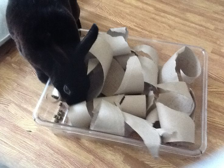 Open up toilet roll insides,place in a tray, sprinkle pellets and watch them forage! Thrifty rabbit enrichment x