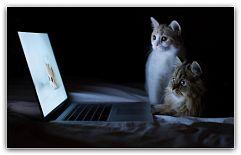 Какая порода кошек самая умная Наверное, каждый, кто хочет впервые завести домашнюю кошку, задумывается о том, какой у нее будет характер, повадки и будет ли она умна, чтобы поддаваться дрессировке. На этот вопрос нельзя ответить однозначно, ведь существует большое количество разных пород кошек ... http://c.cpl1.ru/7kNM