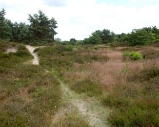 Fietsroute Zuidlaren en omgeving