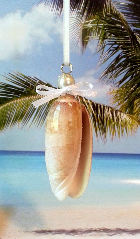 Olive shell Christmas ornament seashell ornament by beachseacrafts