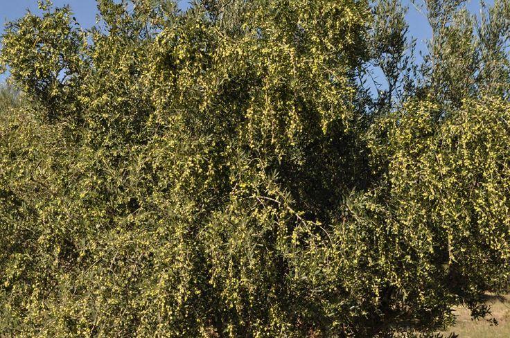 Στρατηγική προετοιμασία για εφαρμογή ζεόλιθου - Πέλλα - Ζεόλιθος | Ζεόλαδο