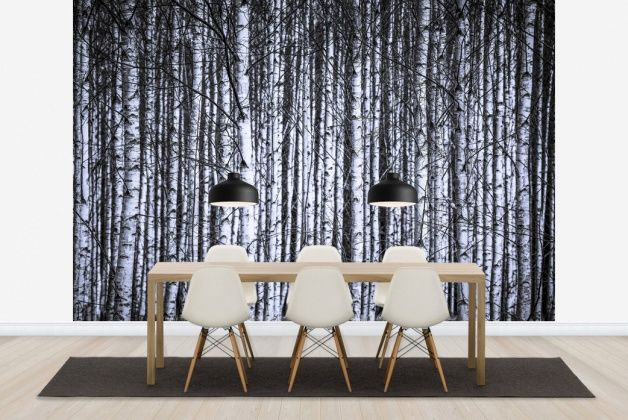 Birch Trunks 2 - Wall Mural & Photo Wallpaper - Photowall