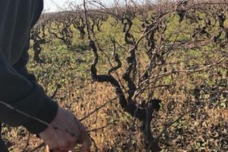 Il vino primitivo di Manduria chiude il 2016 in crescita