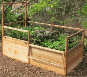 Creating A Raised Bed For Vegetables