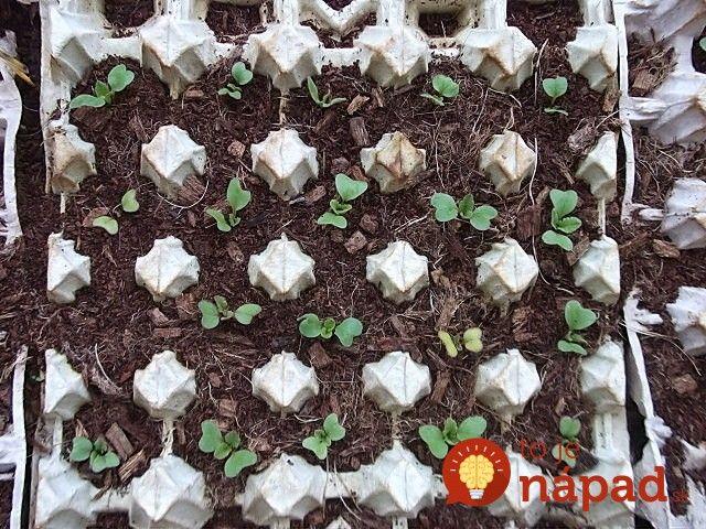Stačí len položiť na zem a nemusíte sa viac starať: Záhradkár ukázal jednoduchý trik, ako získať bohatú úrodu neskorej reďkvičky bez práce!