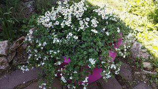 Fiori del mio giardino: Il Giardino