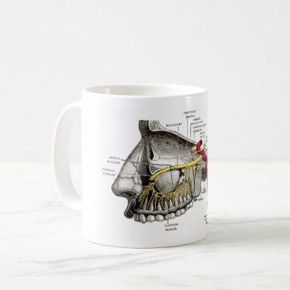 #Maxillary nerves human anatomy coffee mug - #office #gifts #giftideas #business