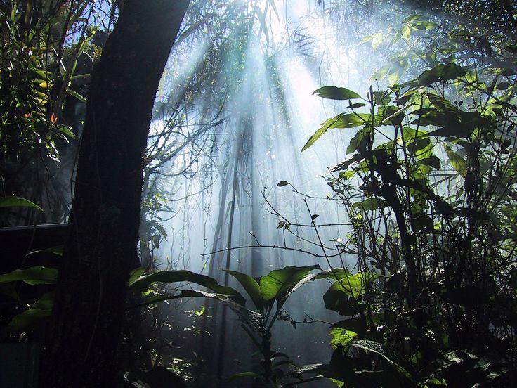 jungle: Lights, Jungles, Amazons Rainforests, Angel Among Us, Legends, Cloud, Desktop Backgrounds, Places, Natural