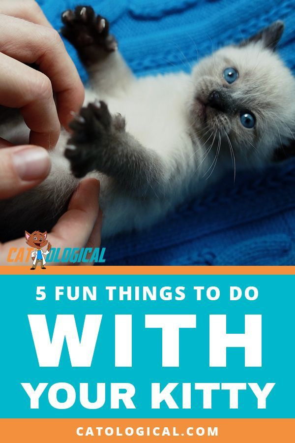 Here Are 5 Fun Things To Do With Your Cat Or Kitten To Keep You Both Occupied And Having A Great Time From Cuddling To Petti Cat Care Cat Training Kitten Care