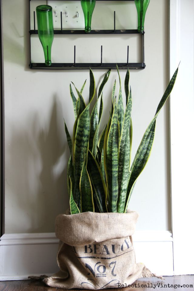 Snake plant in a burlap sack eclecticallyvintage.com