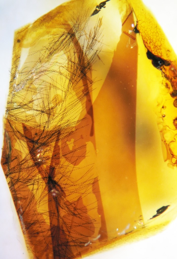 Amber with feathers from the Cretaceous Period