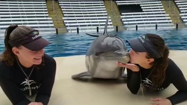Adorable Video Of Dolphin At Seaworld Orlando Kissing Two Trainers Goes Viral Story Ktbc Dolphin Trainer Dolphins Sea World