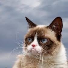 Bildergebnis für snoopy the cat weather app