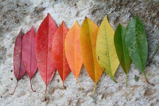"""""""...we begin to stop  in order simply  to beginagain.""""  (Late October - M. Angelou)  Quel giallo che tende all'arancio e poi al caldo del rosso. La natura si colora di tinte che non solo scaldano gli occhi, ma anche il cuore. Giornate di"""