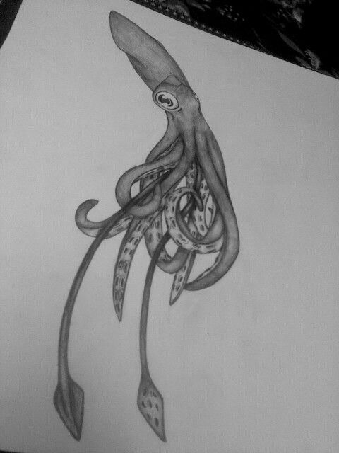 Squid drawing