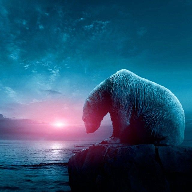 """Alone Polar Bear | Photography by ©Frank Dohle"""