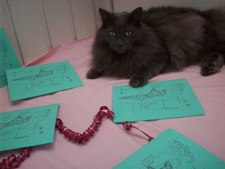 Rosa bandet kampanj och Bamse bland de turkosgröna fina disktrasorna som också har Bamse själv som motiv www.katt4you.se
