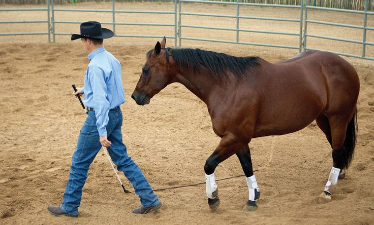 Clinton Anderson explains how a safe relationship starts in the round pen.