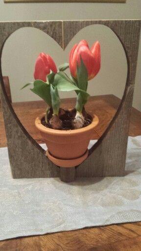 Tulipani per S.Valentino