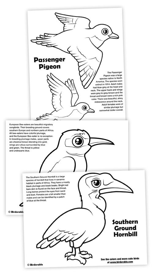 New Coloring Pages Passenger Pigeon Southern Ground Hornbill European Bee Eater Coloring Pages Passenger Pigeon Bee Eater