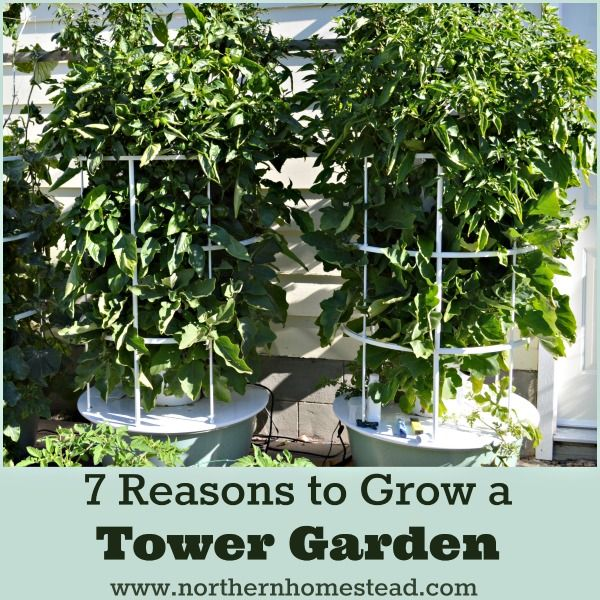 7 Reasons To Grow A Aeroponic Tower Garden