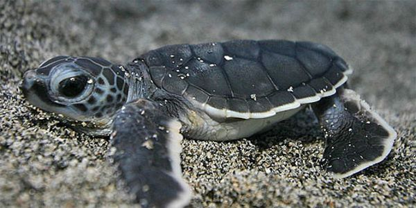 Petition:  Take Action: Endangered Turtles and Drift Gillnets Don't Mix   -   thepetitionsight.com    - 18.05.16 / 123.348