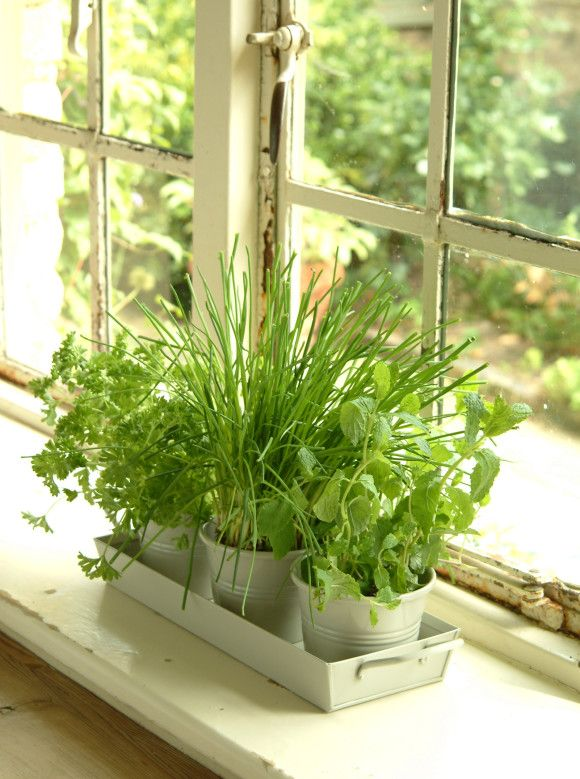 These charming herb pots can be used to create a miniature herb garden in your kitchen or to display small pot plants. Crafted in powder coated steel, it comes with its own carry tray with handles, is finished in a neutral clay colourway and is complete with drainage holes too. £18